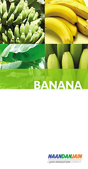 Banana_booklet_spanMX_140817_press-1