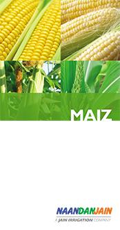 Maiz_NDJ-1