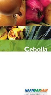 Cebolla_NDJ-1