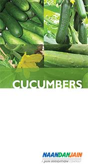 NDJ_cucumbers_eng_171114F-1