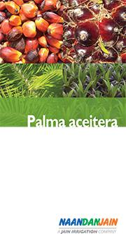 Palma Aceitera_NDJ-1