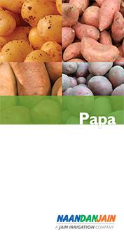 Papa_NDJ-1