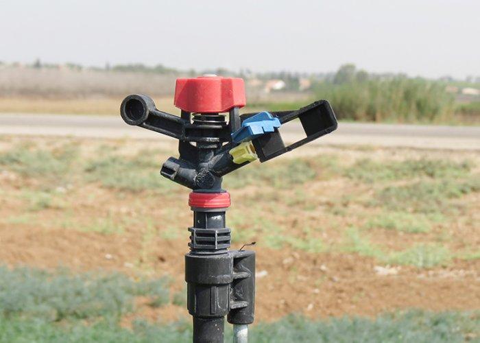 Dill_under_5022_SD-U_sprinkler_in_moshav_Nir-Hen_in_Israel-1 (1)