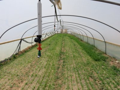 Irrigation_solutions_for_tunnels,_growing_herbs_and_green_leaves__Inverted_GreenSpin___Western_Negev,_Israel__May_2015-2