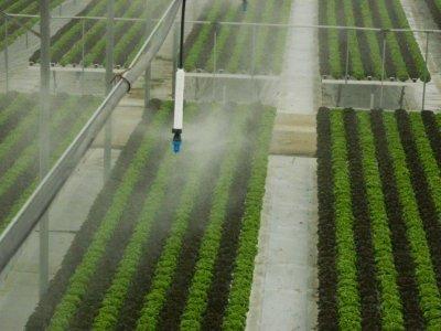 Super_Fogger_in_Greenhouses_-_Israel-4